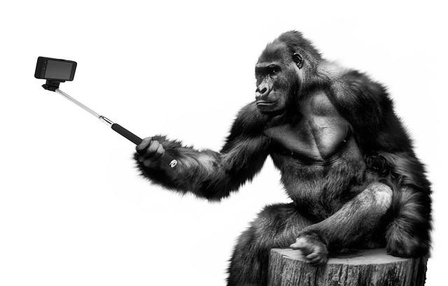 Gorilla som tar en selfie